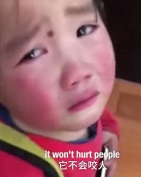 niña llorando por el perro