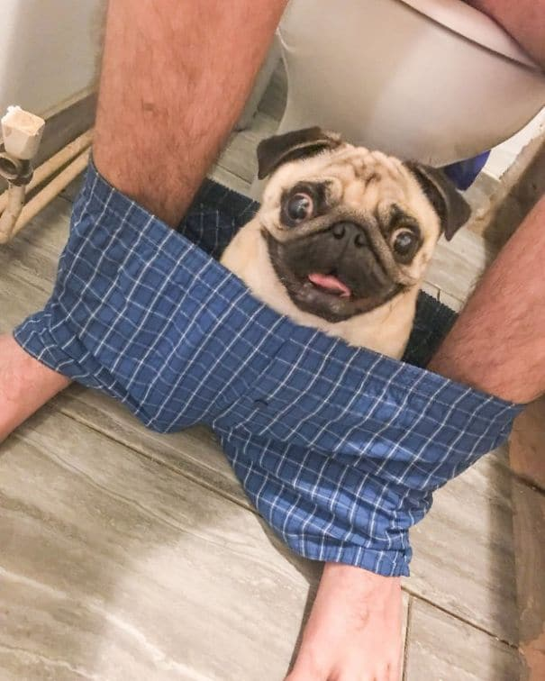pug nigel baño
