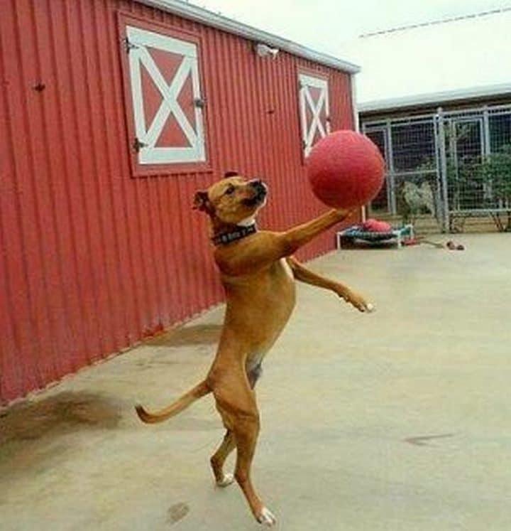 perro jugando baloncesto
