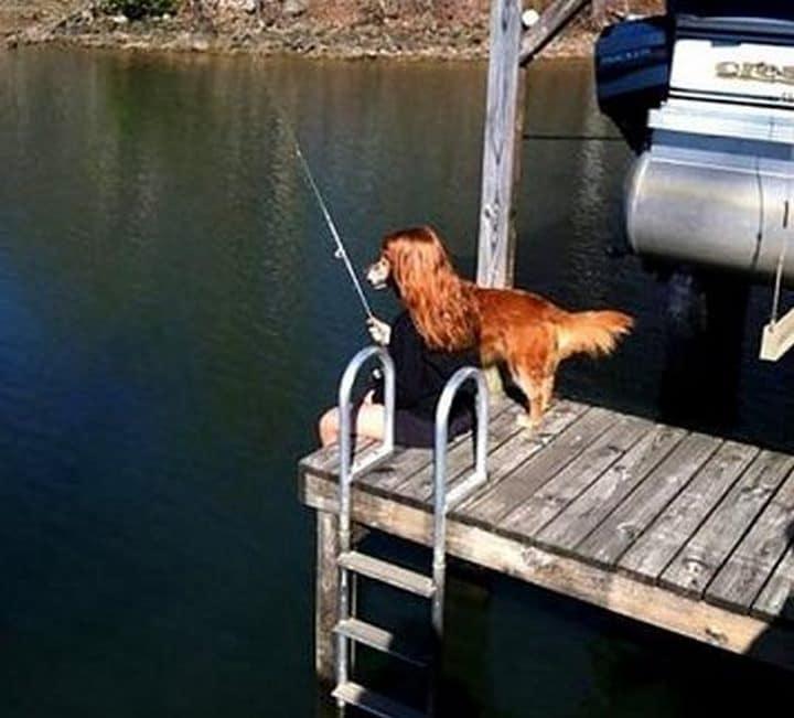 perro pescando