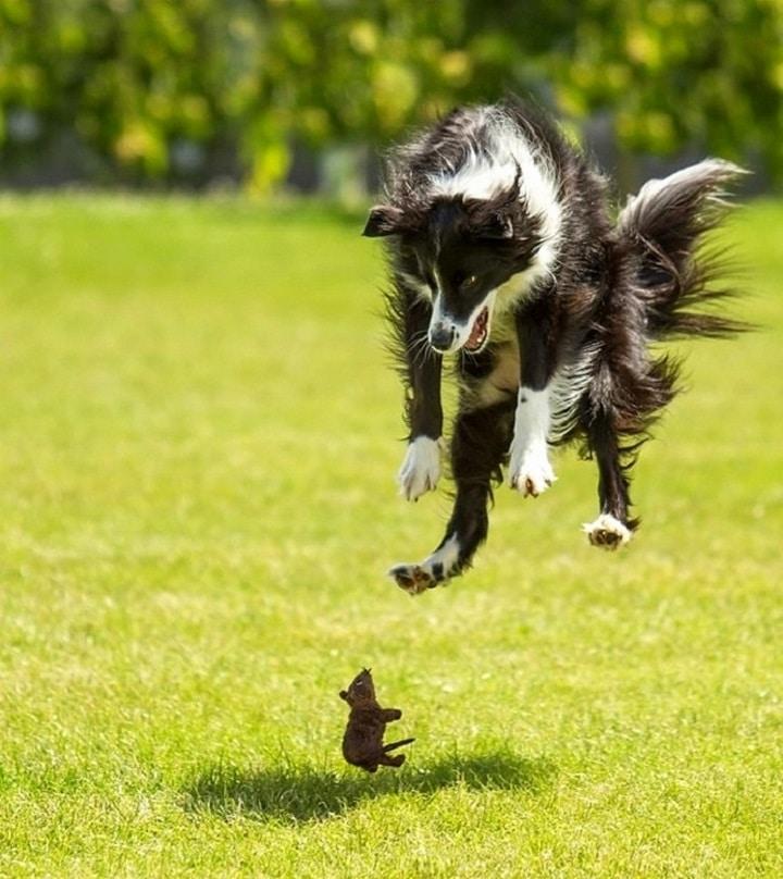 perro y raton