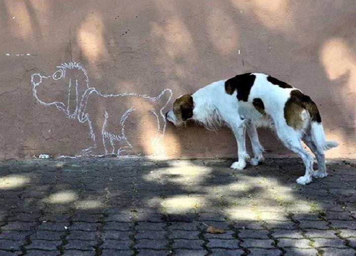 perro pintado y perro real