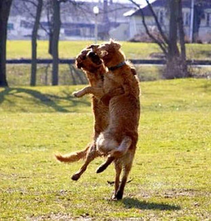 perros bailando