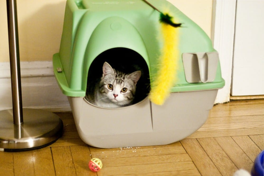 caja de arena gato