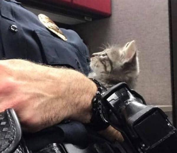 policia rescata gata en florida