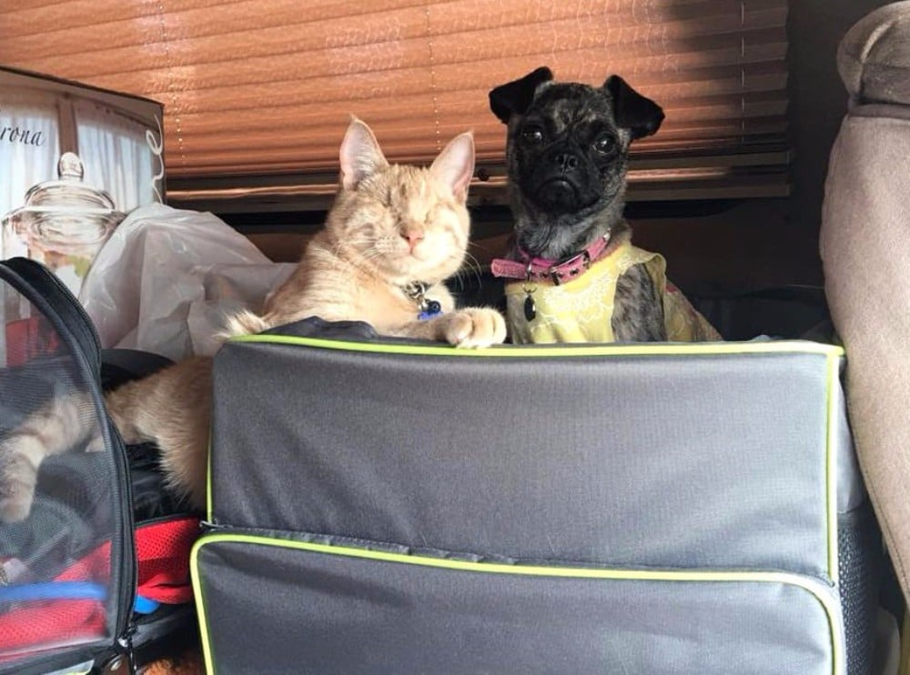 gato ciego y perra discapacitada