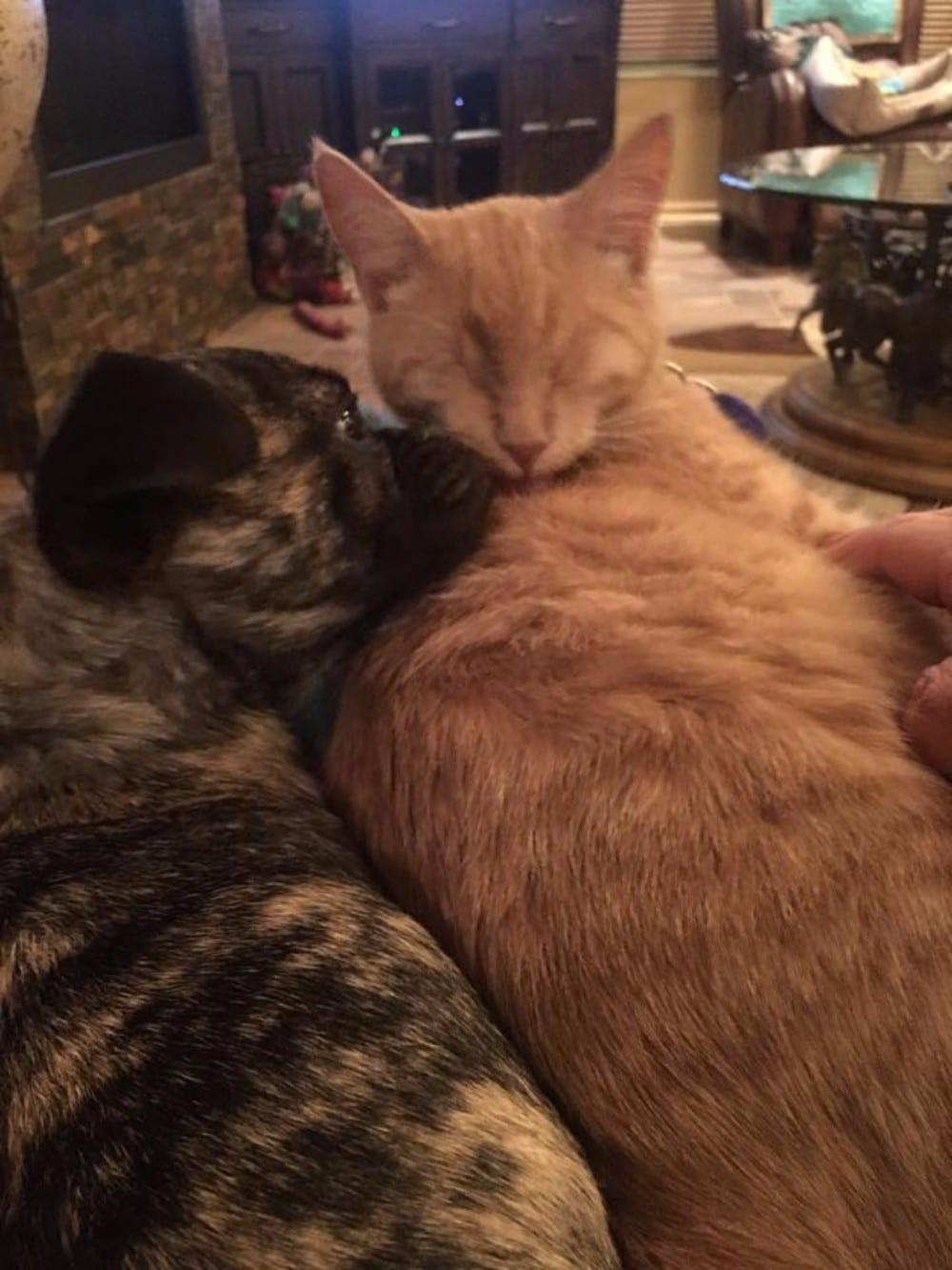 gato y perro echando la siesta