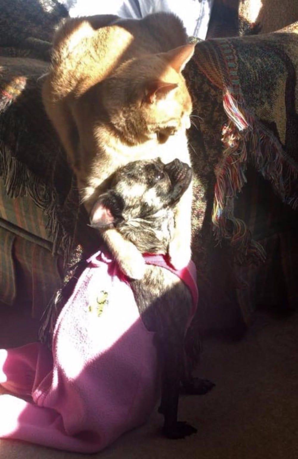 gato y perro tomando el sol