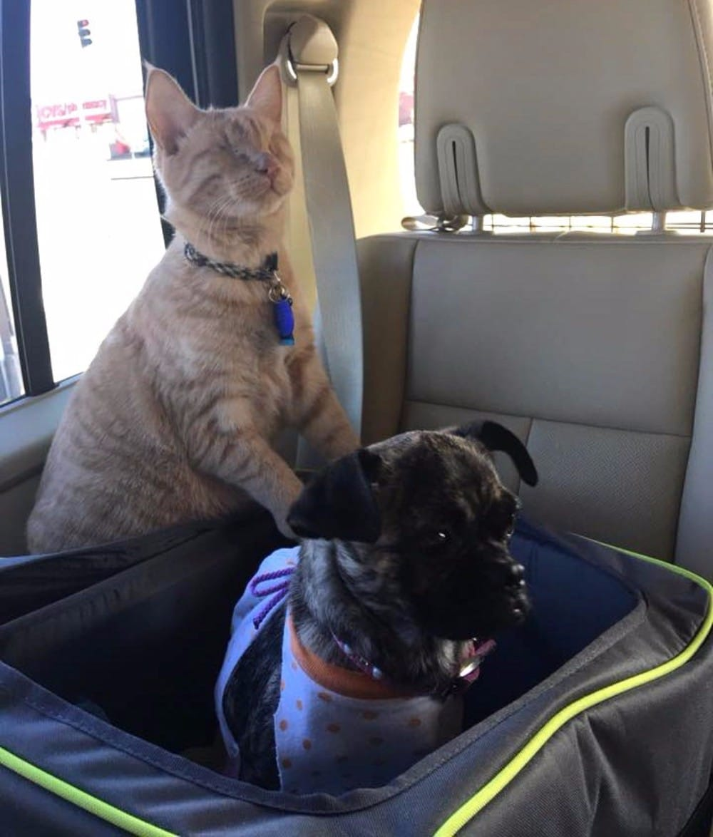 gato masajea perro