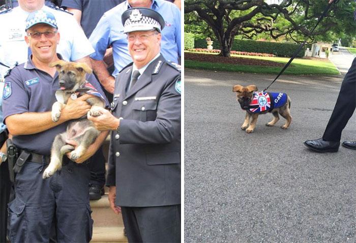 perro policia con sus compañeros
