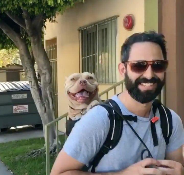 pitbull mochila para perros