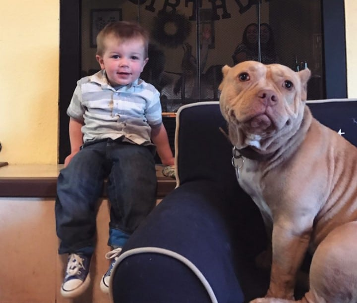 pitbull y niño