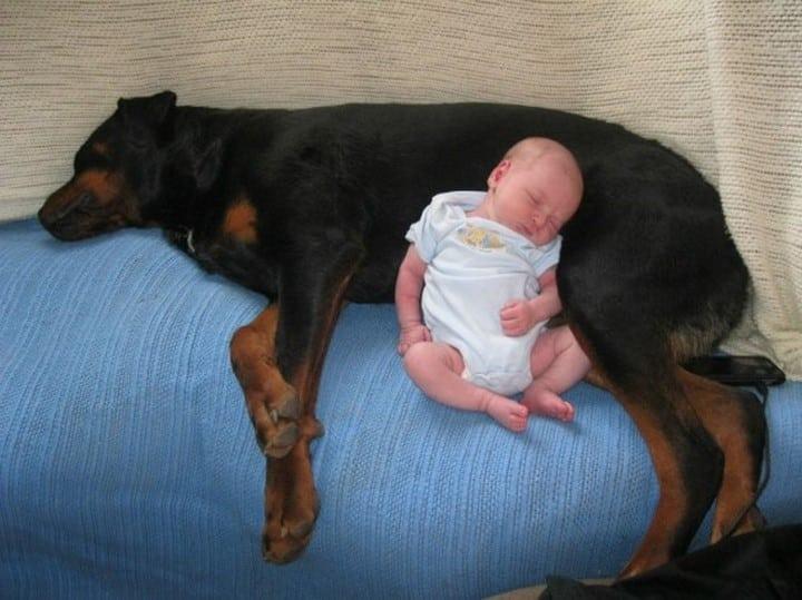 bebe durmiendo sobre perro