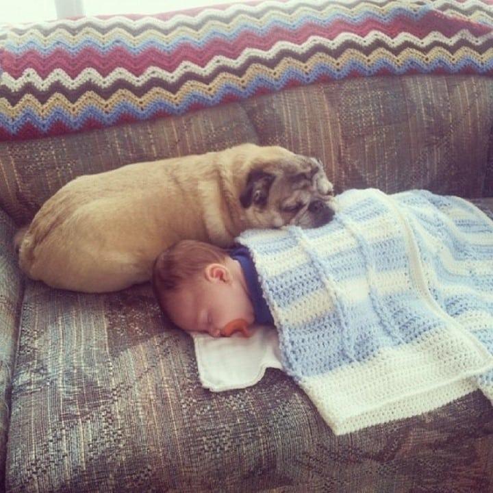 perro sobre bebe sofa
