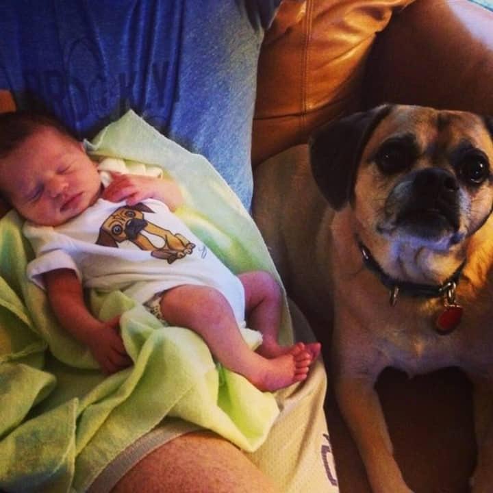 perrito cuidando bebe