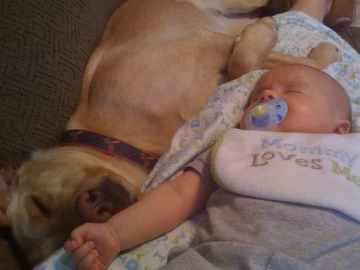 labrador bebe recien nacido
