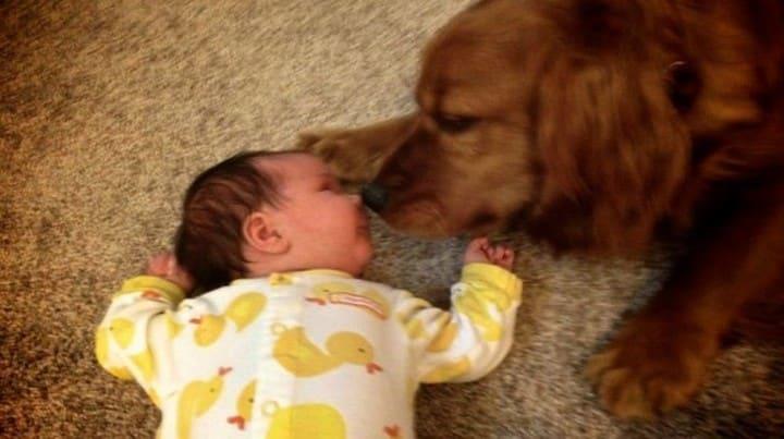 bebe perro beso