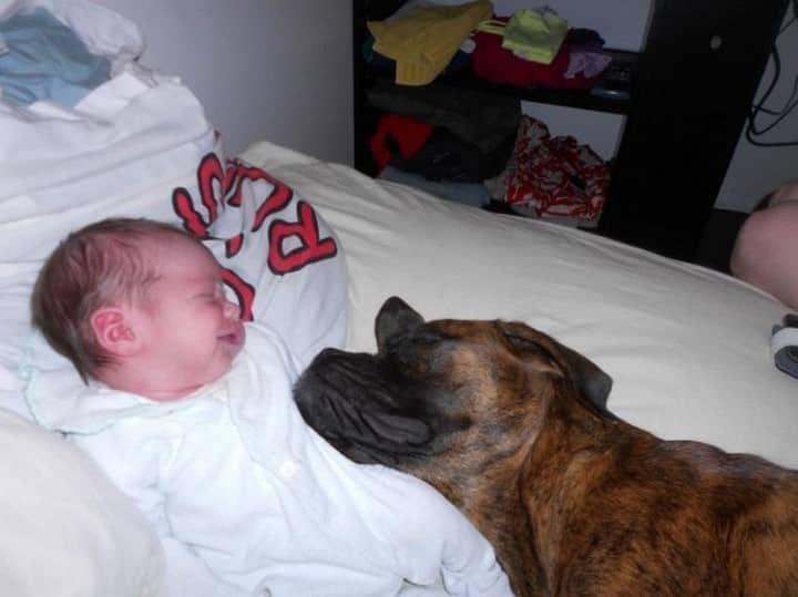 perro enorme sobre bebe