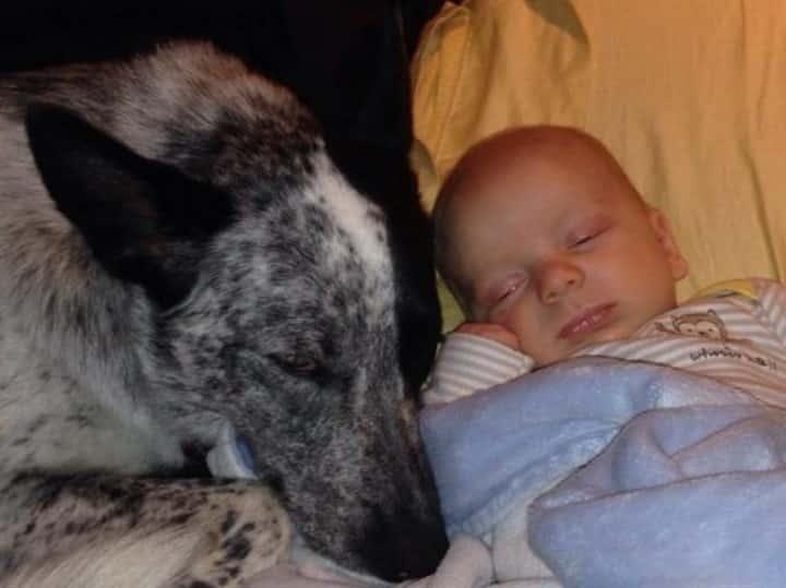 perra cuidando bebe humano