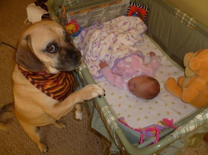 perro junto a cuna bebe