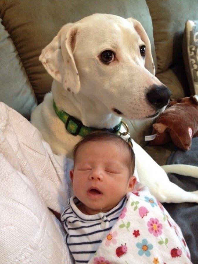 perra con nino recien nacido