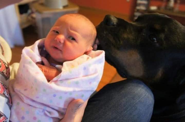 bebe miedo al perro