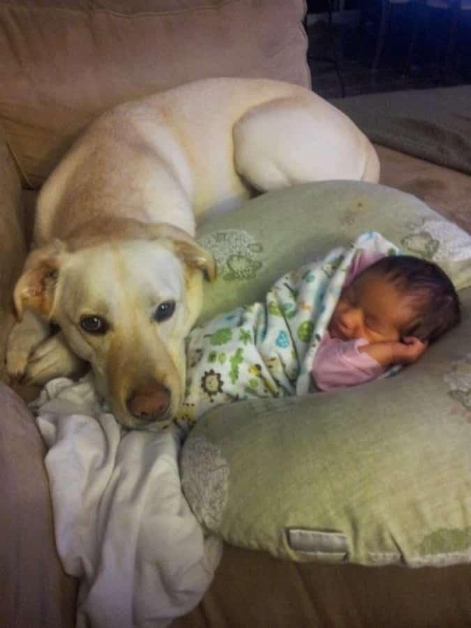 perra cuida a bebe recien nacido