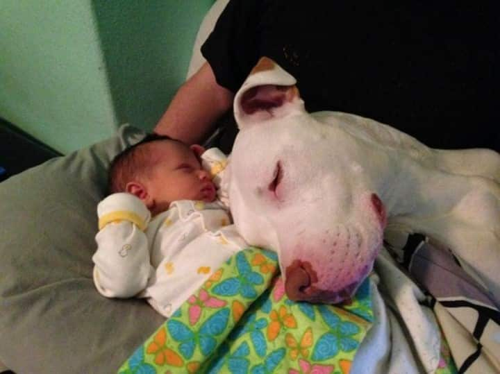 perro apoyado sobre bebe