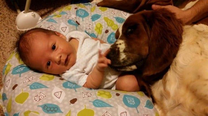 bebe y perro cama