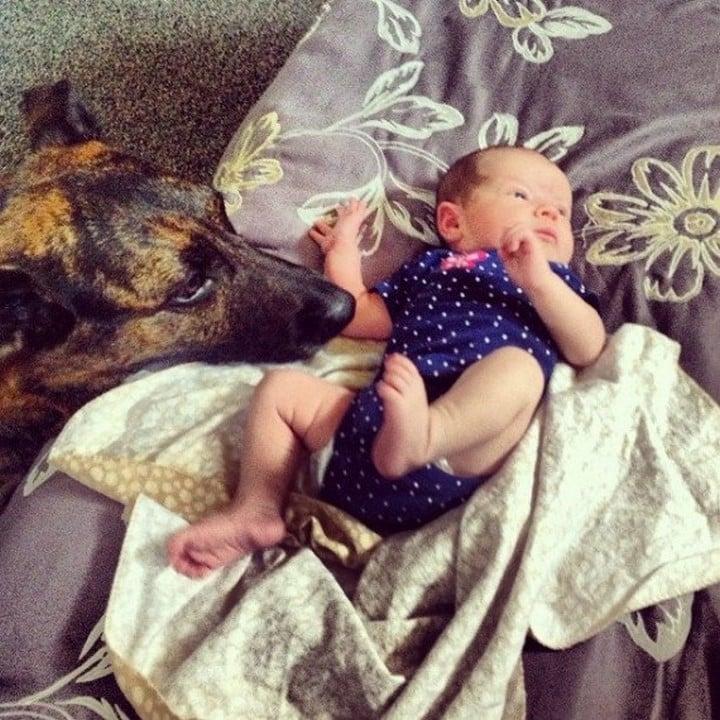 perro mirando bebe