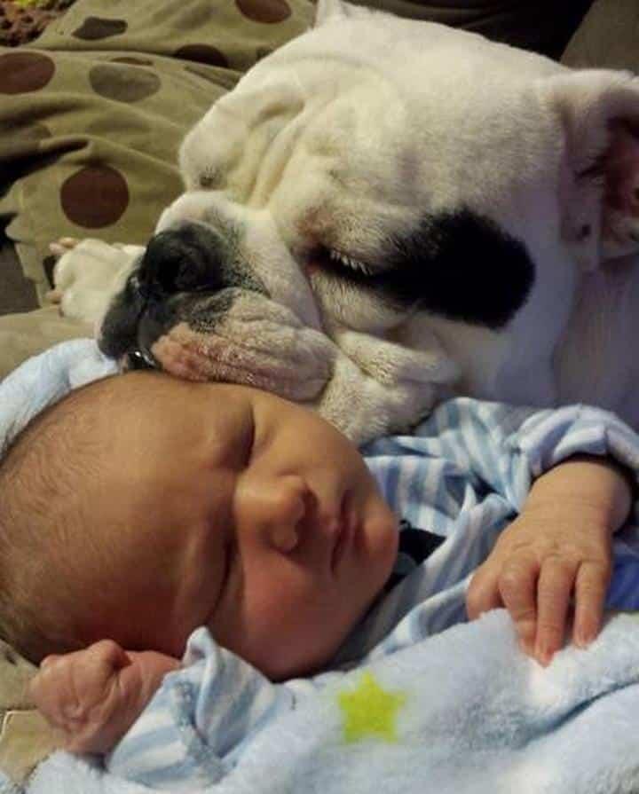 cara de perro junto a cara bebe