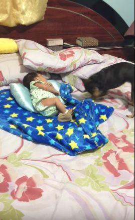 bebé y perro manta
