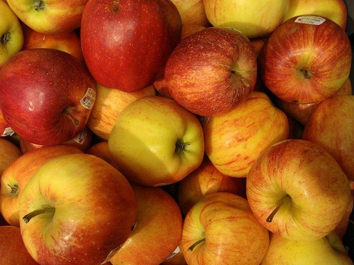 manzanas perro