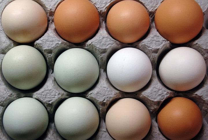 huevos para perros