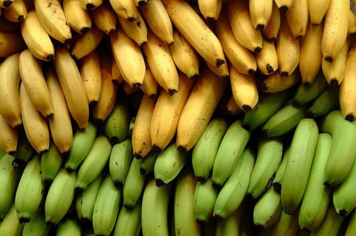 bananas para perros