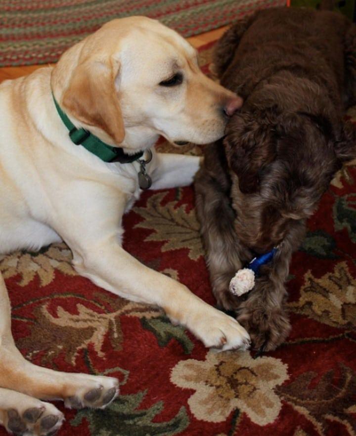 perro blanco y negro beso