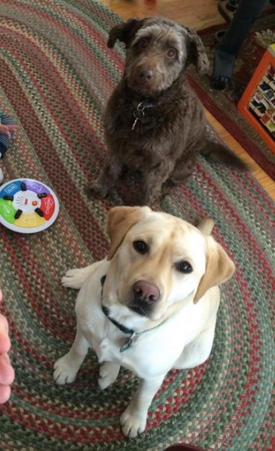 dos perras jugando
