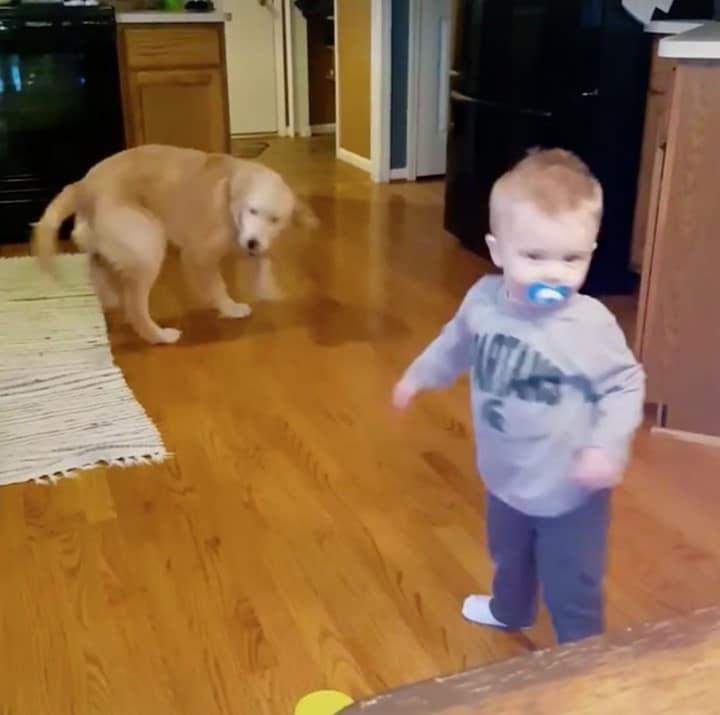 nino bailando con perro