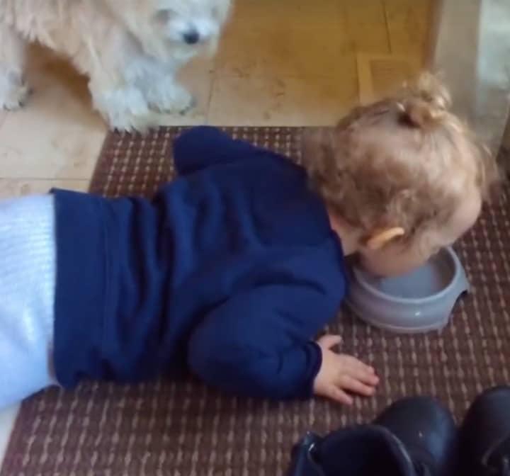 nino bebiendo del cuenco del perro