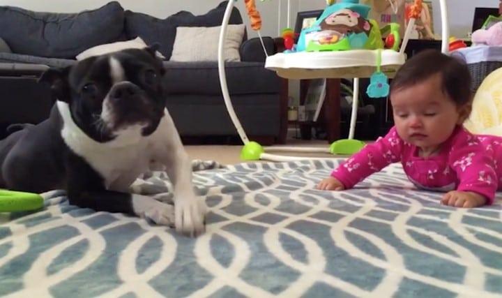 perro gateando con bebe