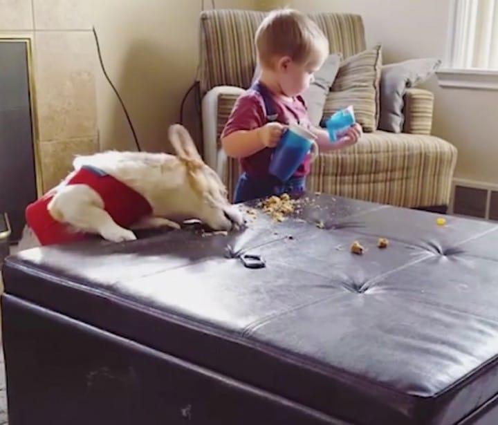 nino y perro limpiando la mesa
