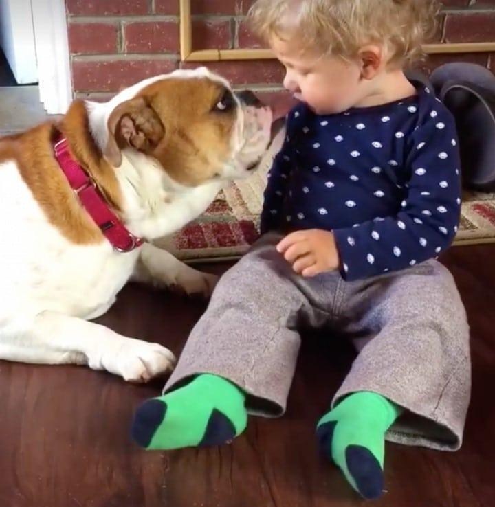 nino ama perro