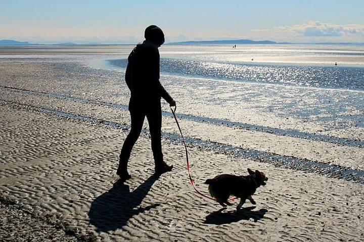 paseo con perro playa