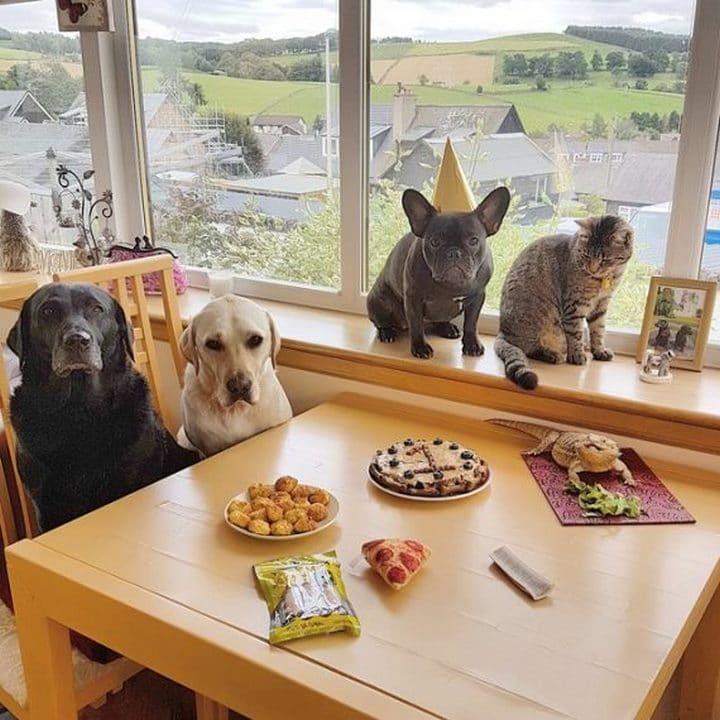 cumpleaños perro con animales