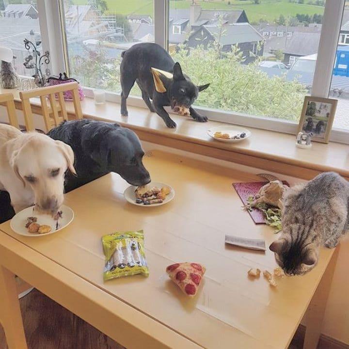 perros comiendo cumpleaños