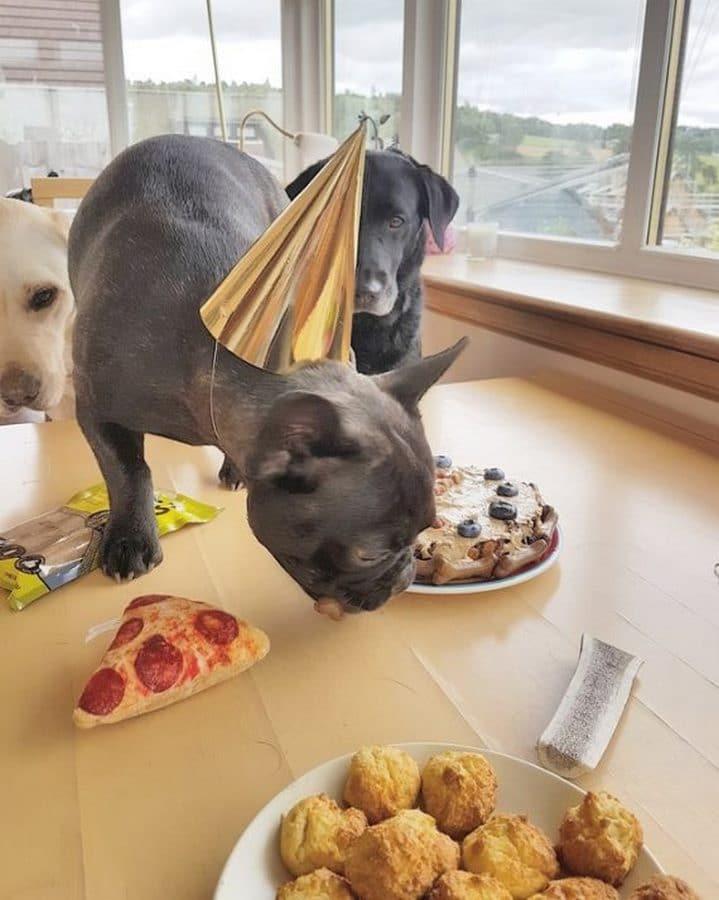 perro comiendo pastel de cumpleaños