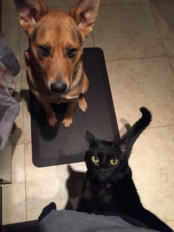 perro y gato negro pidiendo comida