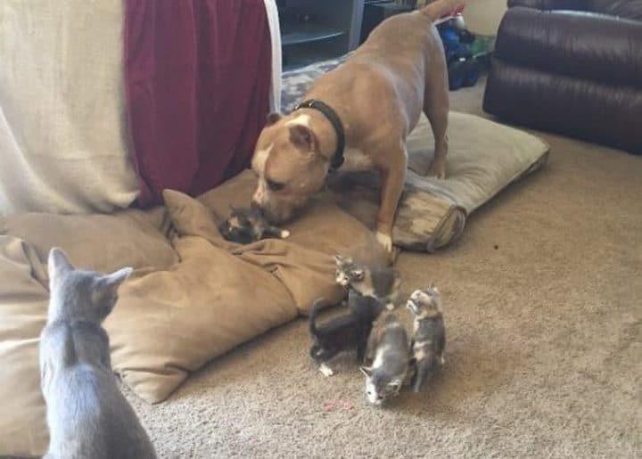 perro jugando con gatos