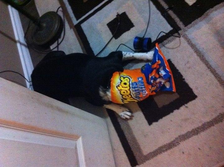 perro asfixiado en bolsa de cheetos