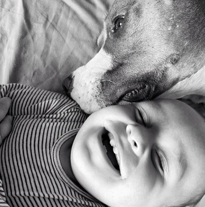 pitbull y bebe besos